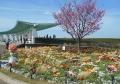 港の見える丘公園の横浜緋桜