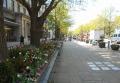 日本大通りのチューリップ花壇