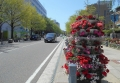 日本大通りと花柱