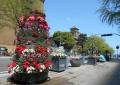 大きな鉢植えと花柱