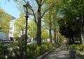 新緑の山下公園通り①