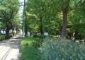 谷津の森公園(道は県道三芳富士見線)