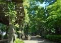 鬱蒼たる森林