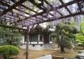 藤棚から見る阿弥陀堂