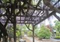 藤棚から見る本堂
