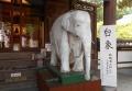本堂脇の白象