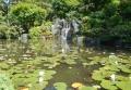 日本庭園の池には睡蓮が…