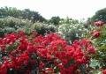 花の配置もダイナミック