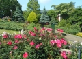 バラとカスケードの庭①