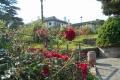 バラとカスケードの庭②