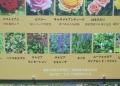 花の表示板