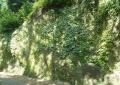 境内の岩壁