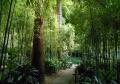 浄智寺・境内の竹林