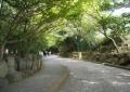 閑静な舗道