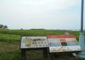 ソレイユの丘・花畑