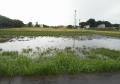 大雨直後の調整池
