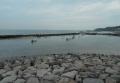 潮だまりでは貝の採取が…