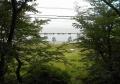 木々の間から見る走水海岸