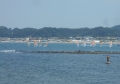 沖に見えるのは和賀江島
