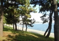 松林から見る海(横浜港)