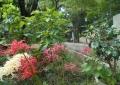 彼岸花越しに見る仙波東照宮の鳥居