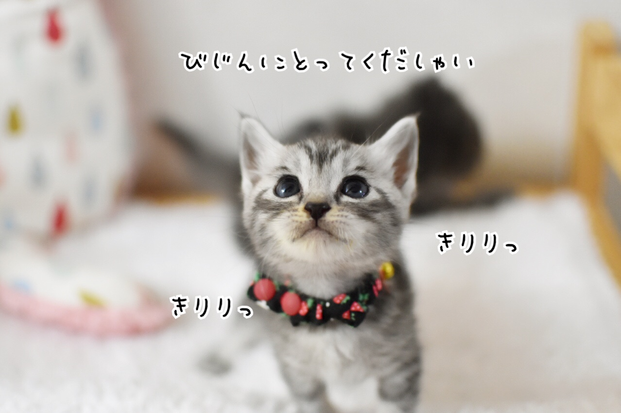 fc2blog_2018060712290262d.jpg