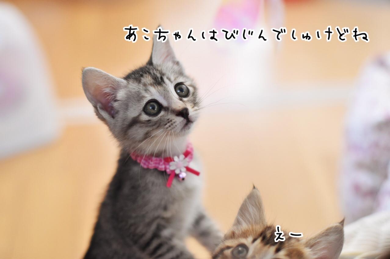 fc2blog_20180614144231ff7.jpg