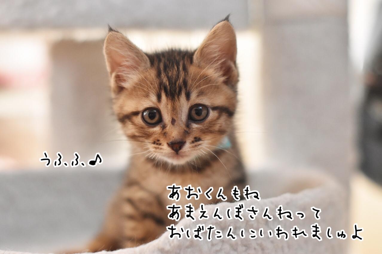 fc2blog_20180614144443e54.jpg