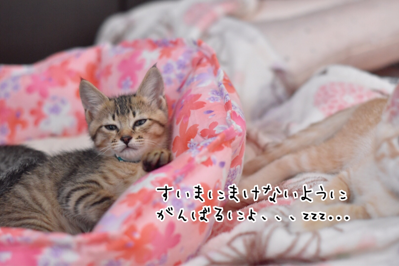 fc2blog_20180630092604508.jpg