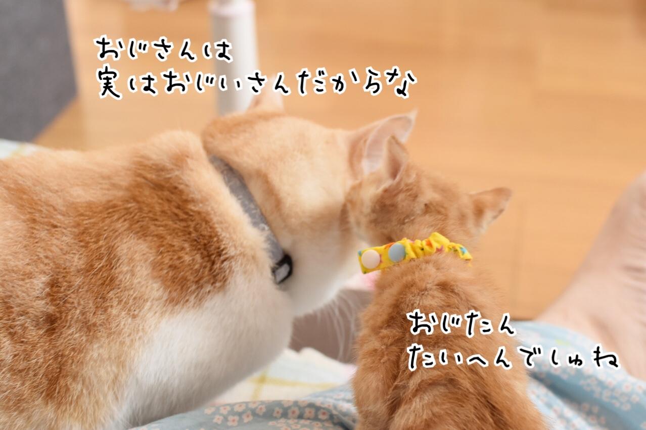 fc2blog_20180807012956da4.jpg