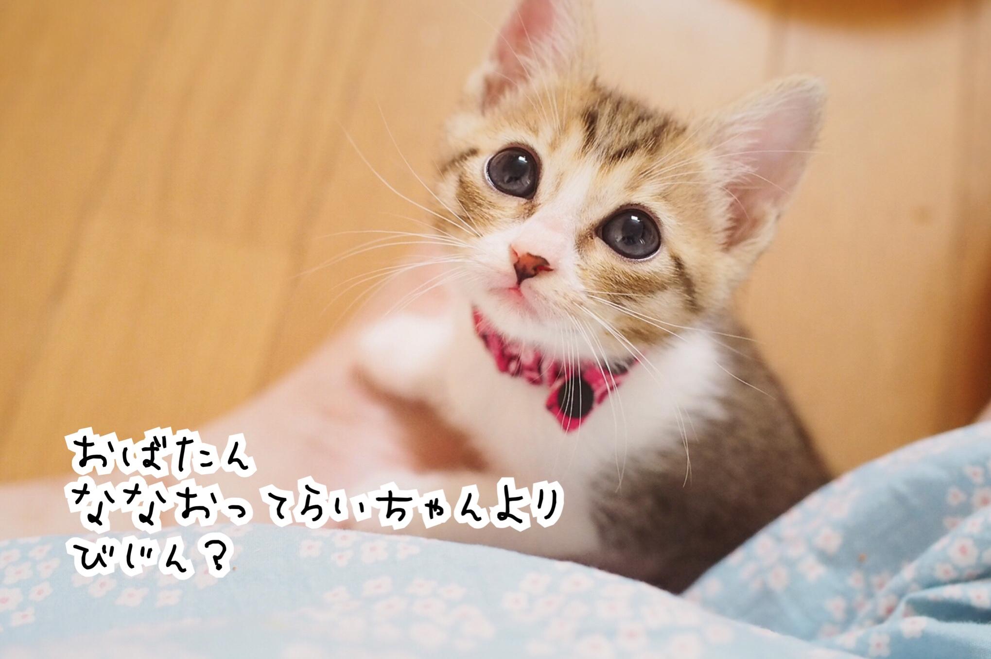 fc2blog_20180824163239316.jpg