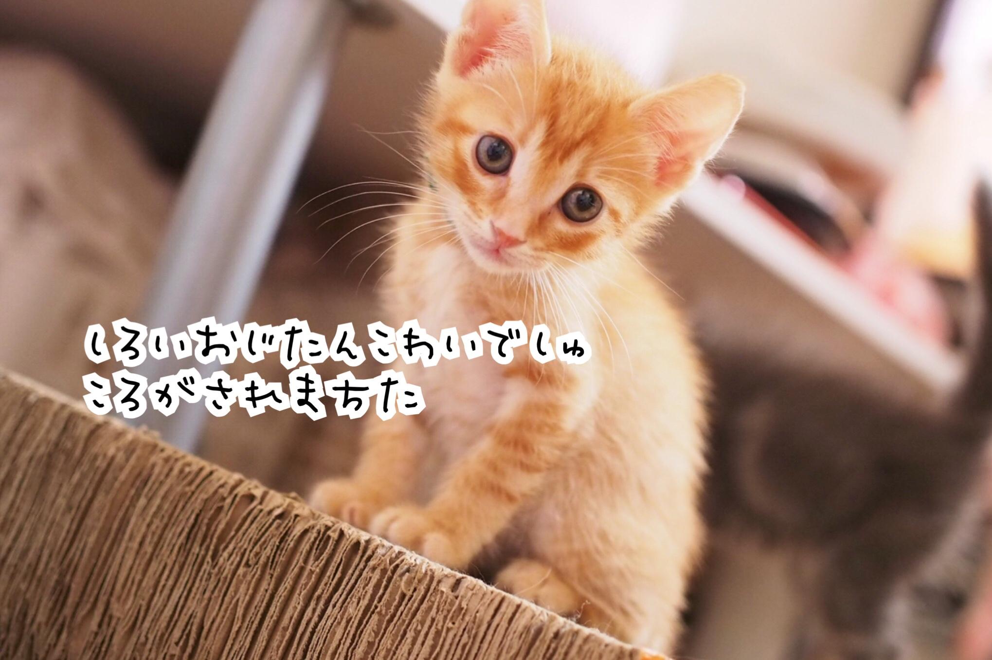 fc2blog_2018082416354787c.jpg