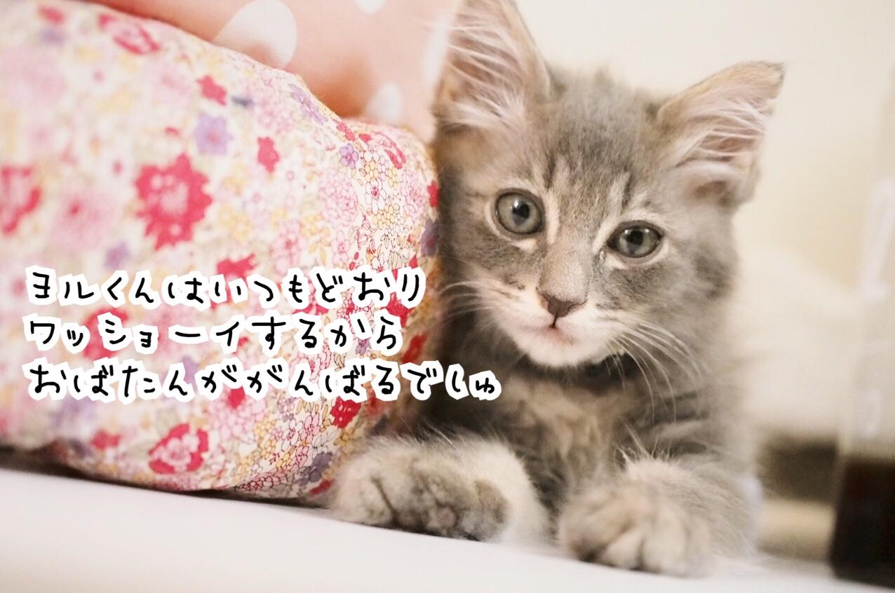 fc2blog_201809012313382a1.jpg