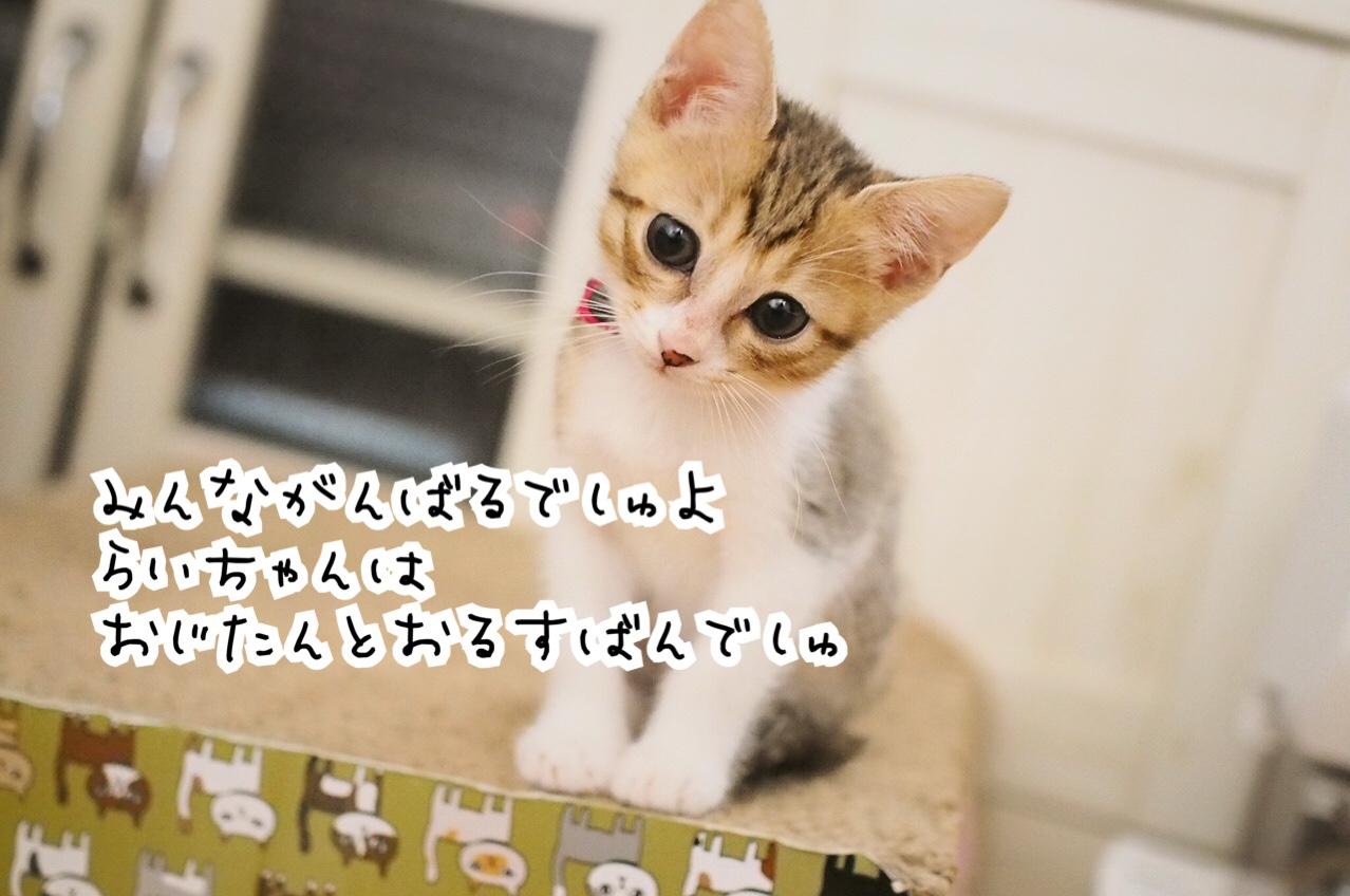 fc2blog_20180901231348aac.jpg