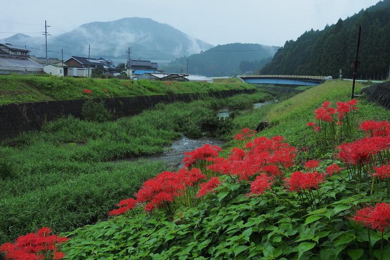 higanbana004.jpg