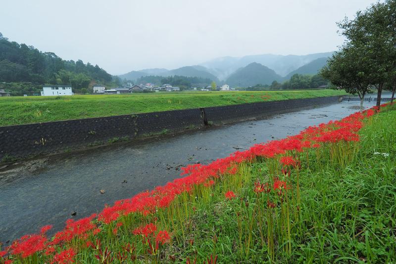 higanbana005.jpg