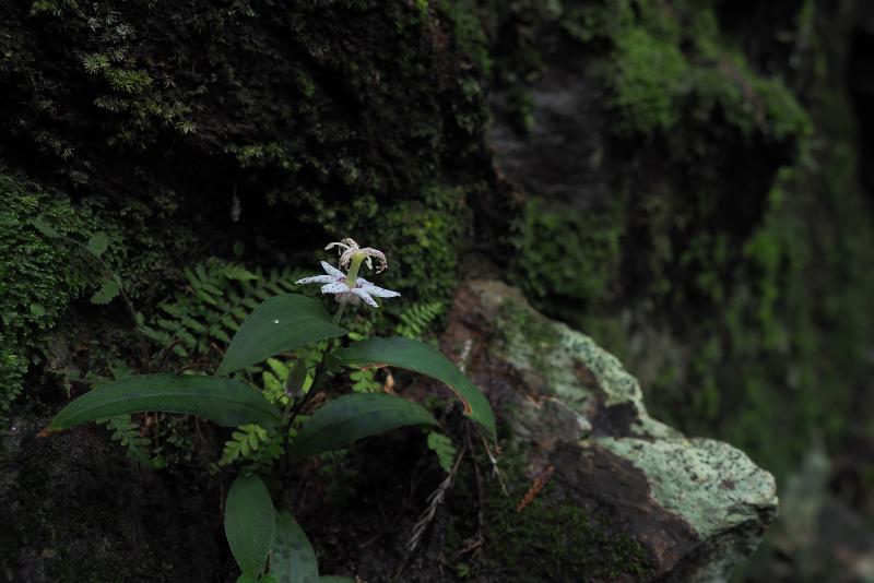 yamazinohototogisu013.jpg