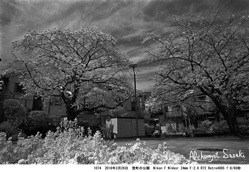 戸越の桜1074-4