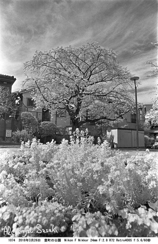 戸越の桜1074-7