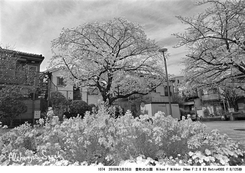 戸越の桜1074-1