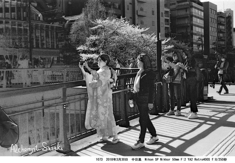 花見の人達1073-38