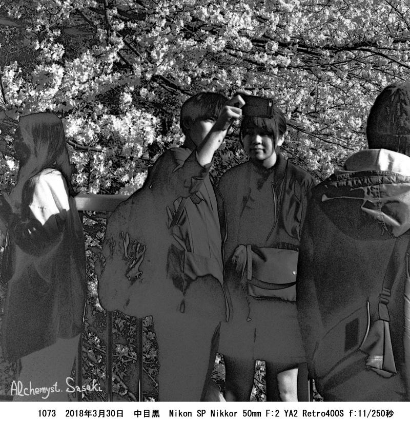 花見の人達1073-41