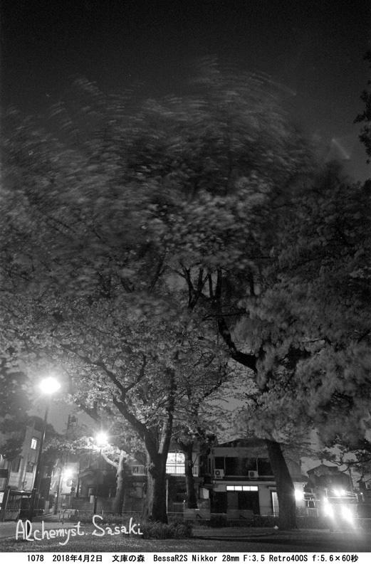 夜桜1078-12