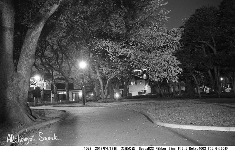 夜桜1078-19
