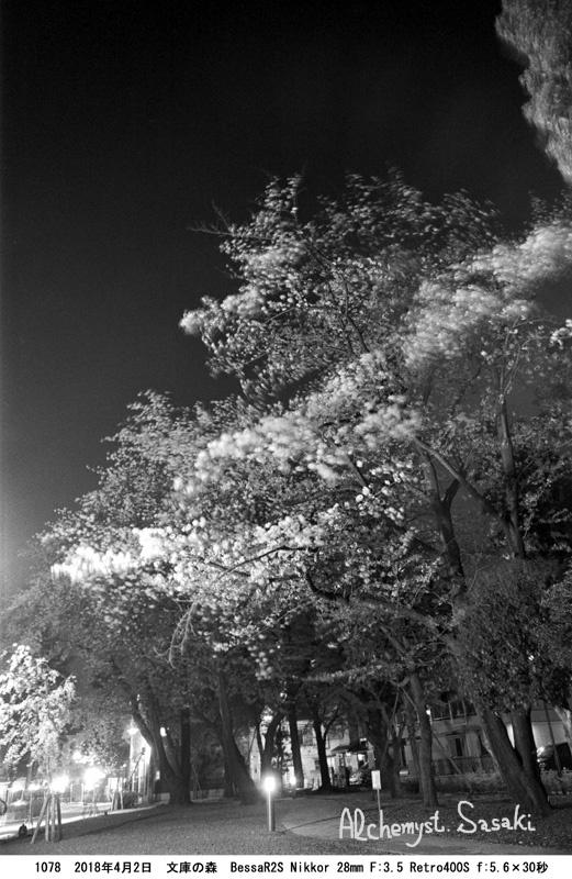 夜桜1078-16