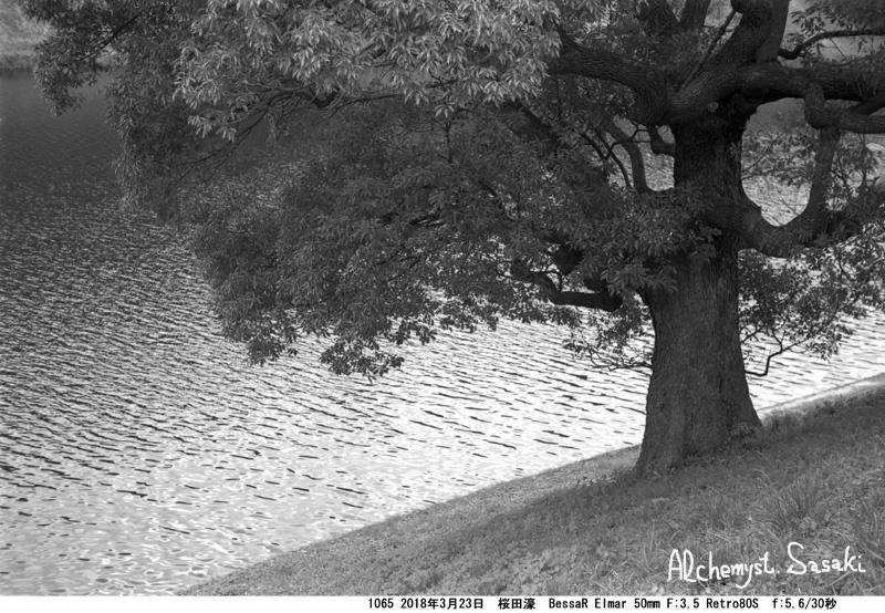 樹1065-30