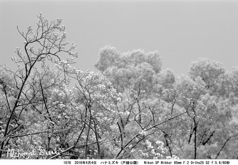 花見月1076-46