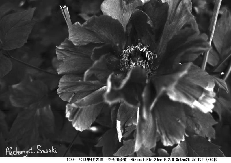 牡丹1083-25a