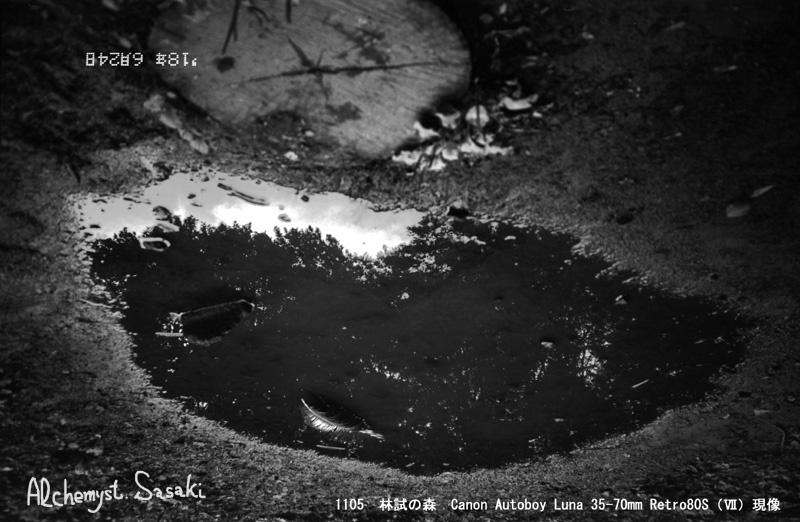 林試の森1105-22