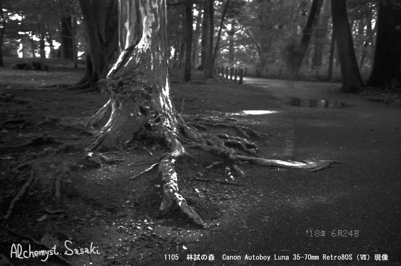 林試の森1105-23